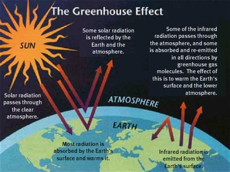 green house effect seed to feed me what is the greenhouse effect