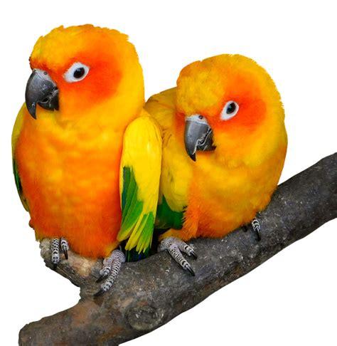 parrot bird tropical  photo  pixabay