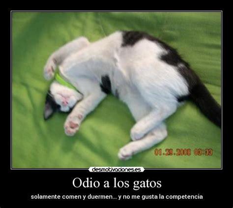 imagenes de odio los ok odio a los gatos desmotivaciones
