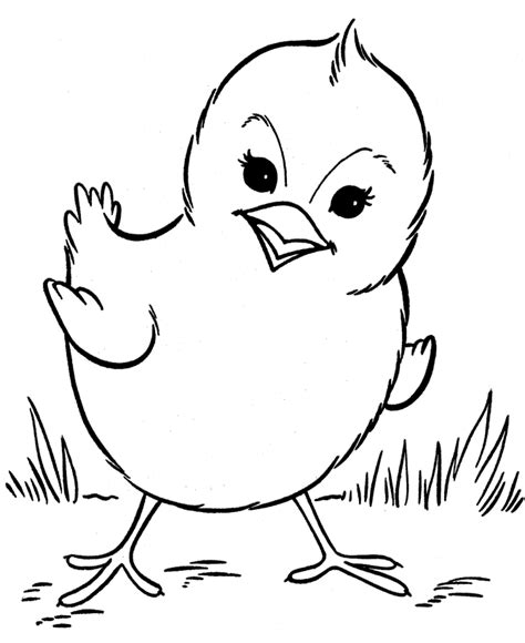 Chicken Coloring Pages Cute Chick  Animal Coloring Pages