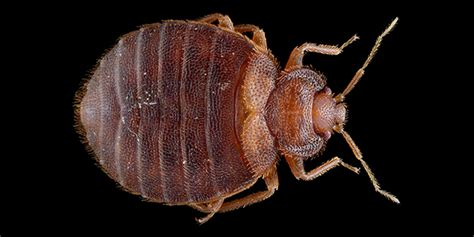 search  hotel room  bed bugs wired