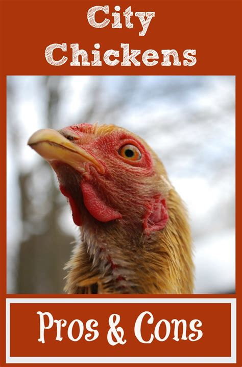 the pros and cons of raising chickens in the city