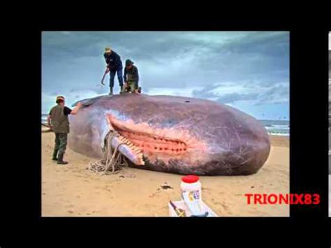 imagenes mas increibles de la historia top 5 los 5 animales mas grandes del mundo top 5