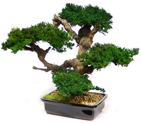 Flower Pot Sale by Beautiful Bonsai Decoration Ideas Room Decorating Ideas