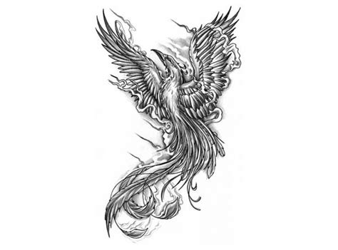 black and white phoenix tattoo designs images search tat