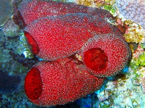 Vase Sponge by Strawberry Vase Sponge Circulatory 101