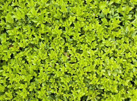 pflegeleichter garten pflanzen immergr 252 ne bodendecker pflegeleichter garten
