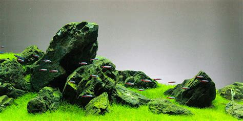 Aquascape Style by Understanding Iwagumi Aquascaping Style The Aquarium Guide