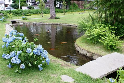 sustainable backyard fish farming   dig  pond