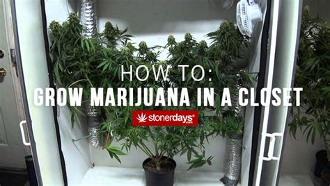 how to grow marijuana in a closet
