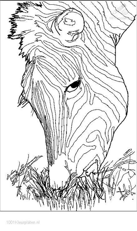 zebra head coloring page zebra head coloring coloring pages