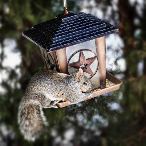 squirrels on bird feeders bird cages