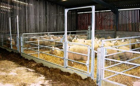 sheep shed designs uk shed designs 10 x 12 no1pdfplans