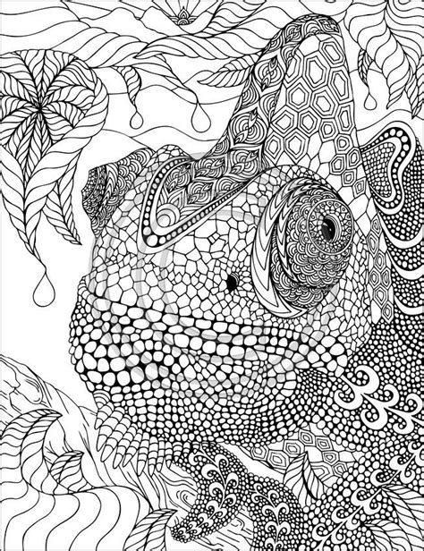 pin  cb bw coloring pages