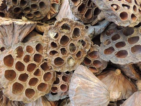 wann sterben bakterien wann stirbt ein wespennest aus