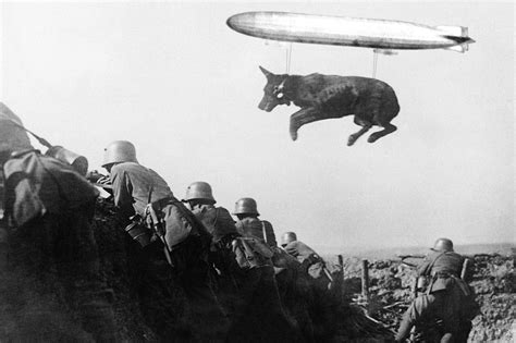 at war notes from the front lines at war blog nytimes psbattle messenger dog leaping over trenches in ww1