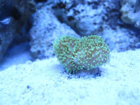 new coralssandbaraquatics