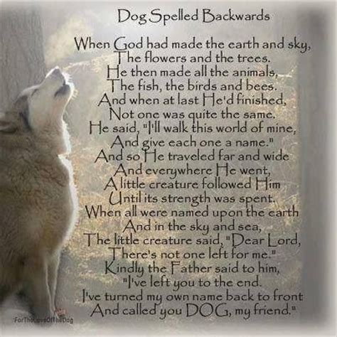 bible verses about dogs spelled backwards uplifting quotes prayers bible verses pi