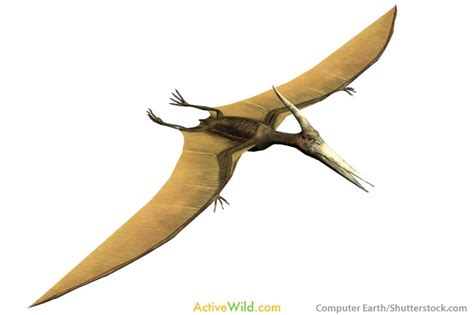 dinosauro volante dinosaur facts for students info pictures from