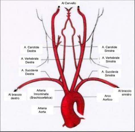 doppler vasi epiaortici anatoblogren