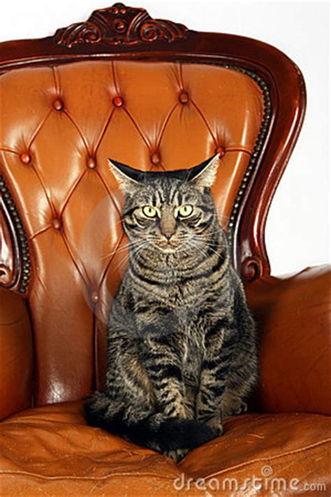 Cat Sitting In Chair by Cat Sitting On Chair Royalty Free Stock Photo Image