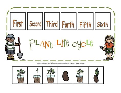 printable animal life cycles preschool printables plant life cycle preschool