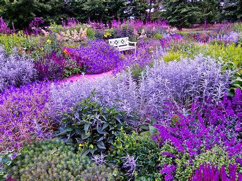 purple flower garden 1191 best companion planting images on pinterest