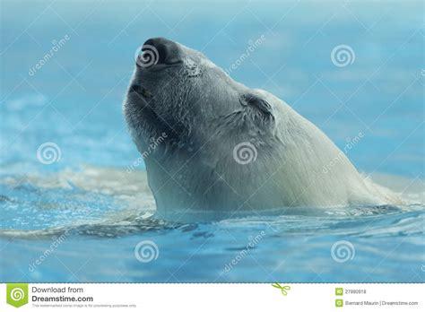 up of polar royalty free stock photos image 27980918