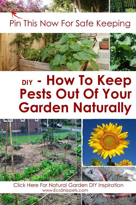 how to keep pests away from garden how to keep pests out of your garden naturally with worm