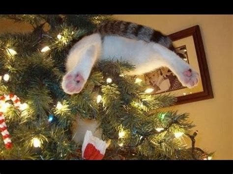 funny wayscto keep cats off christmas tree cats vs trees cats compilation part 2