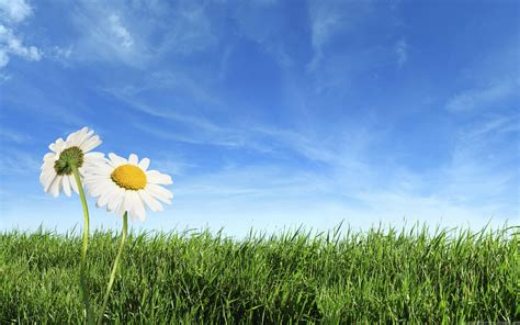 Two Flowers At Field Nature Backgrounds Powerpoint Nature Backgrounds For Powerpoint