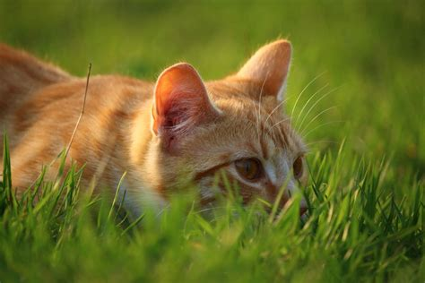 Pictures Of Nature Cat