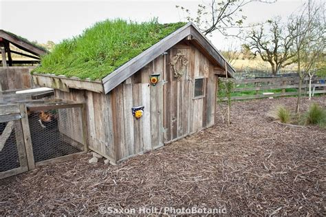 Green Roof For Shed by 17 Best Images About In A Coop On Green