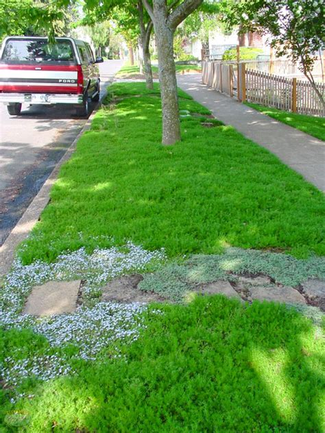 lawn alternativesdesign how to choose groundcovers and plants to use as lawn