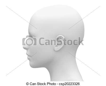 testa anatomia muscoli testa anatomia femmina lato muscoli testa