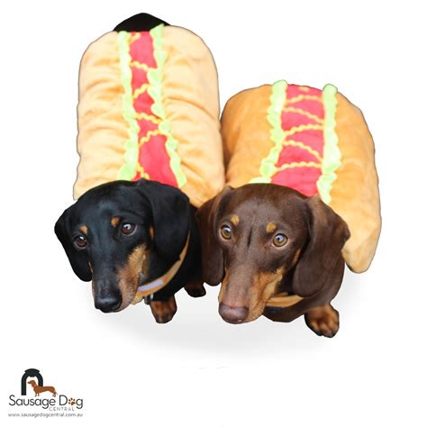 puppy selling buy costume for dachshund beds and costumes