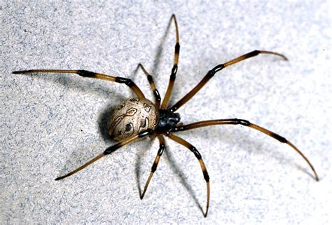 how do you get rid of spiders in your house get rid of spiders naturally
