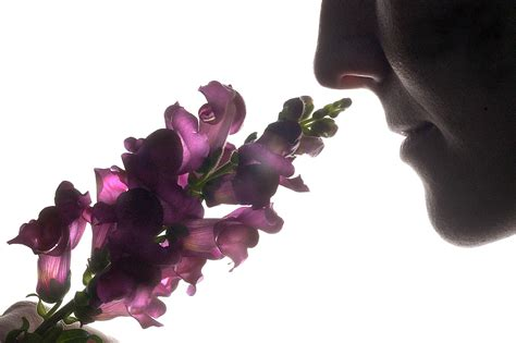 how to scent a stop to smell the flowers but do it before they re pollinated