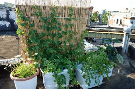 Bucolic Bushwick Growing Tips For Rooftop Vegetable Gardening Rooftop Vegetable Garden