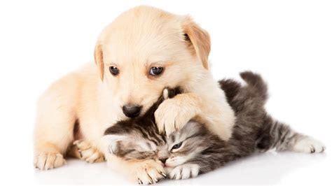 kittens puppies puppy and kitten wallpapers 58 images