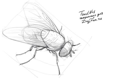 how to fly with a how to draw a fly step by step arcmel