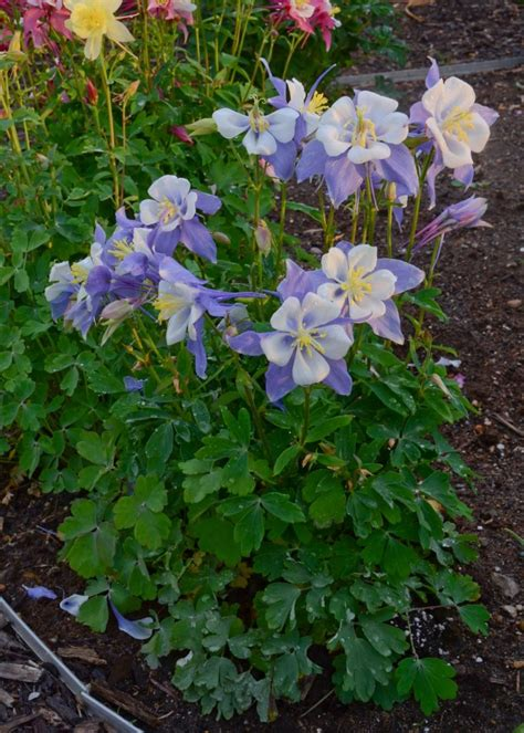 perennial flowers for shade gardens gardens flowers for shade and the shade