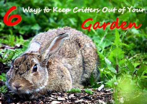 6 ways to keep critters out of your garden s home