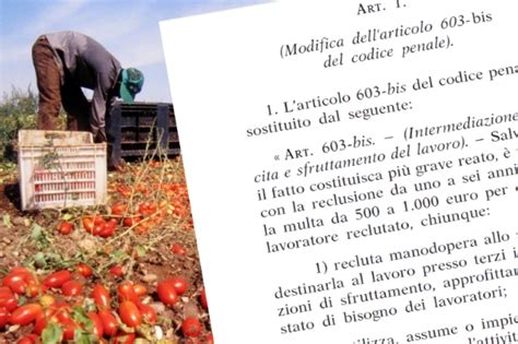testo immigrazione il testo della nuova legge contro il caporalato il