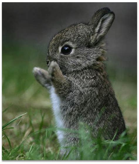 most adorable animals bunny pictures cute animal pictures and videos blog part 2