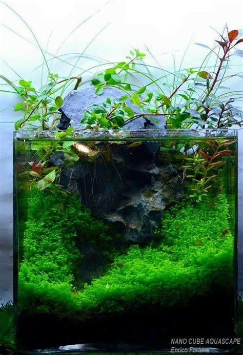 aquascape betta 133 best aquascape images on pinterest aquariums fish