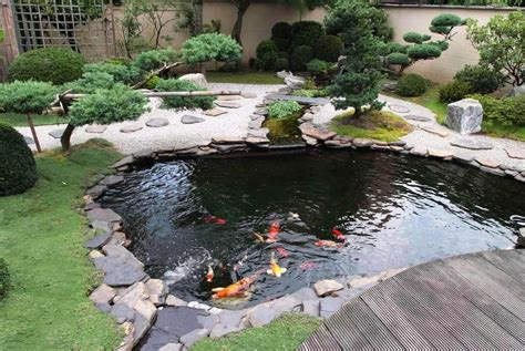 pictures of fish ponds in backyards tips on creating and maintaining a backyard fish pond