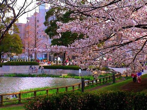 imagenes de japon wikipedia file cherryblossomsukimapark jpg wikimedia commons