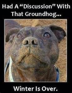 feels like groundhog day meaning 120 best images about pit bull memes on