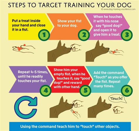 how much is obedience for dogs target can speed up learning